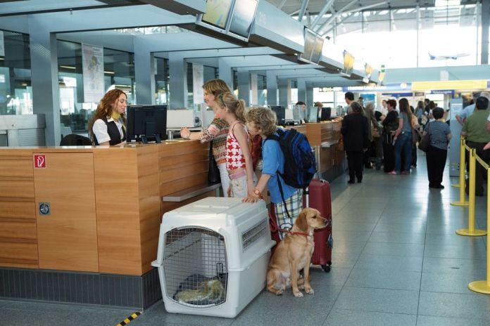 Как перевезти собаку в самолете