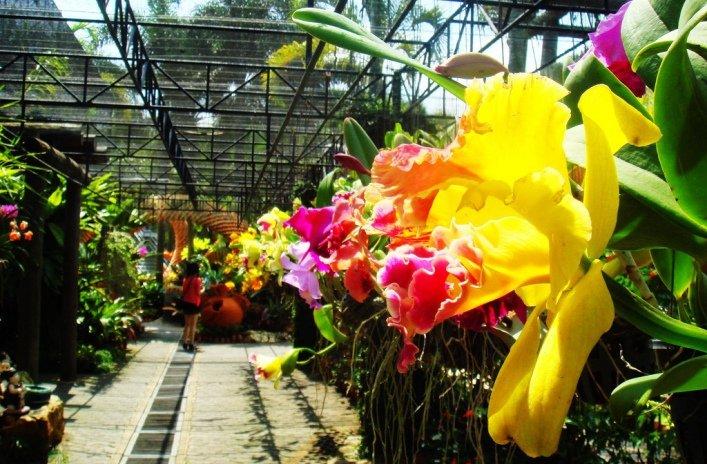 Сад орхидей на Пхукете