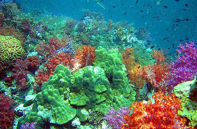 Дайвинг на острове Бамбу