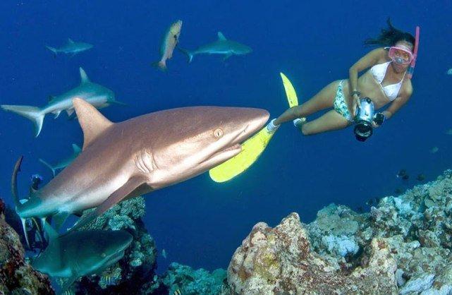 Акулы на Пхукете