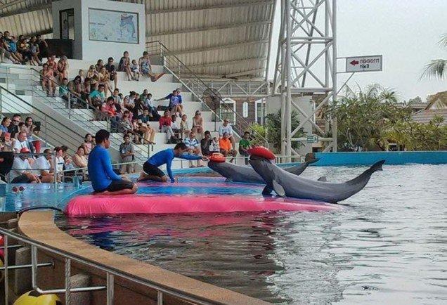 Delfinarii Pattaya-2
