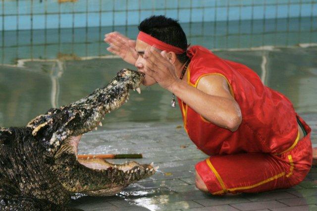 Крокодиловое шоу на Ко Чанге