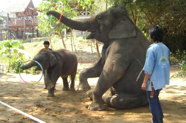 Ферма слонов в Канчанабури