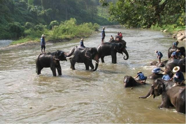 Лагерь для слонов Ban Chang Thai