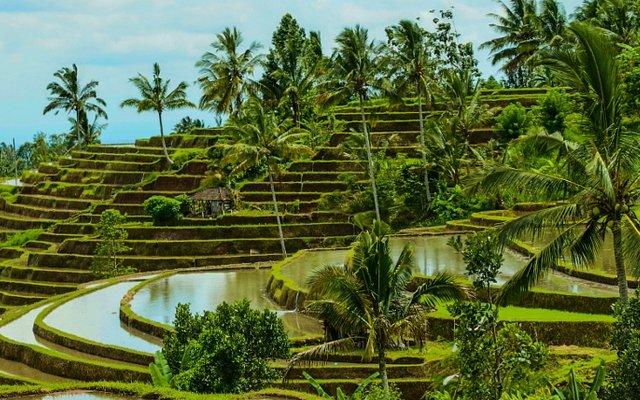 Рисовые террасы Джатилуви на Бали