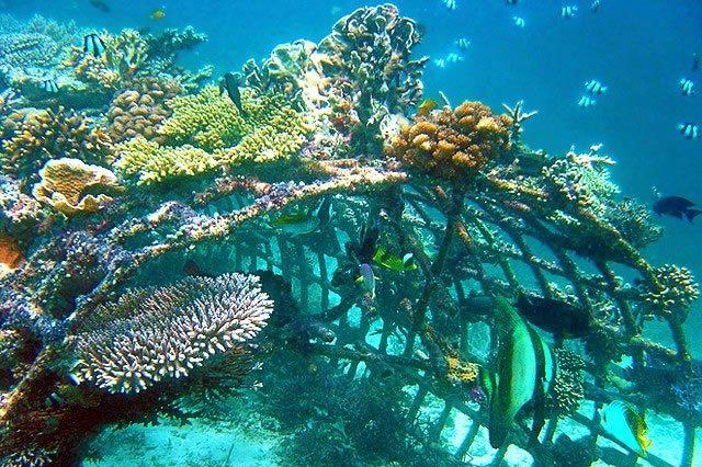 Снорклинг на Бали