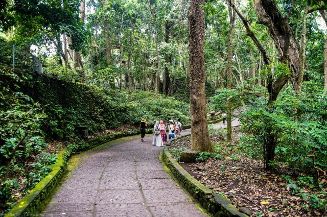 Лес обезьян на Бали