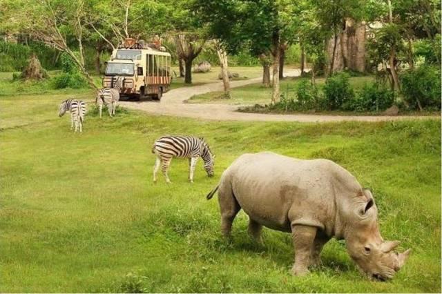 сафари парк Бали Сафари парк на Бали Сафари парк на Бали (Bali Safari and Marine Park) – парк дикой природы для всей семьи: наблюдение за животными, катание на слонах и аквапарк. safari park 2