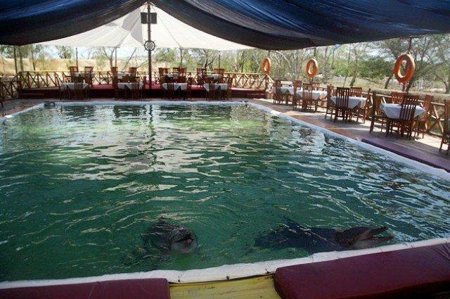 Dolphin Bay Restaurant