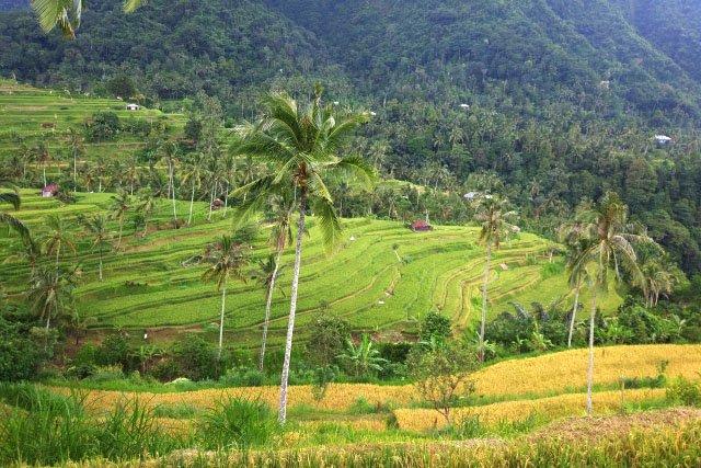 Водопад Секумпул на Бали