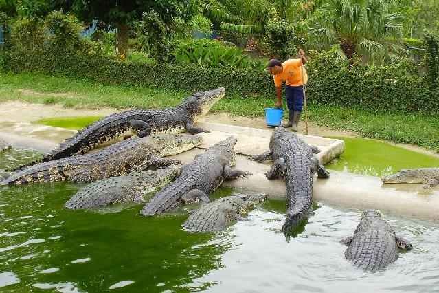 Крокодиловая ферма на Бали