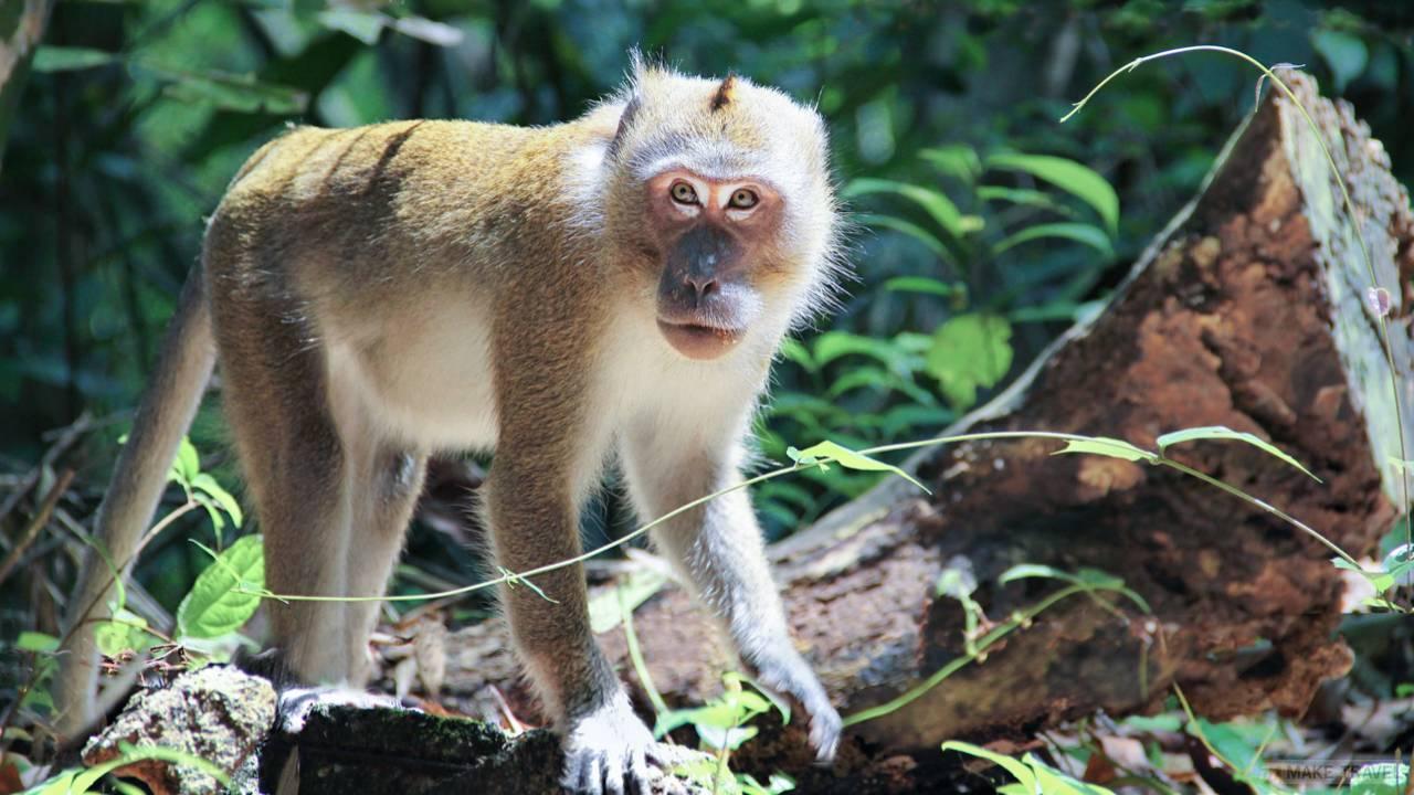 Стоянка обезьян на Пхукете