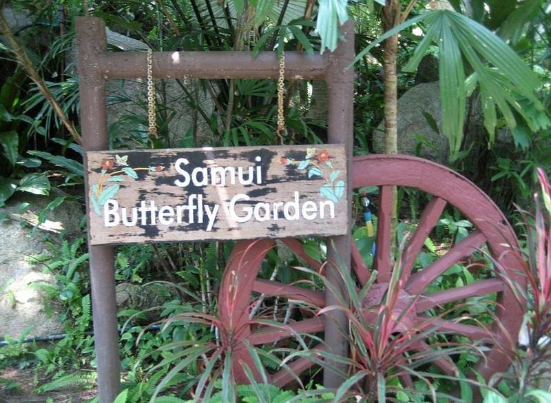 Сад бабочек и музей насекомых
