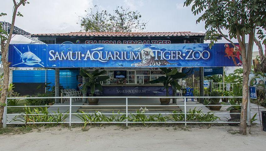 Аквариум и зоопарк тигров