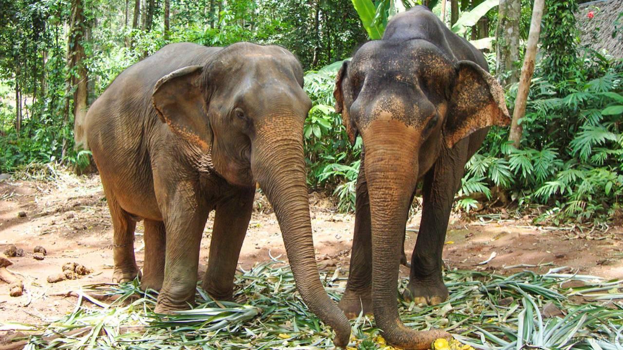 Слоновья ферма Сиам Сафари