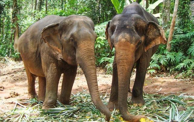 Катание на слонах на Пхукете