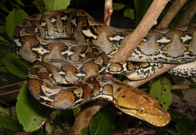 Змеи Таиланда