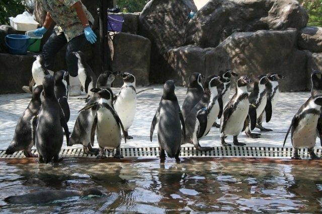 Зоопарк в паттайе как добраться