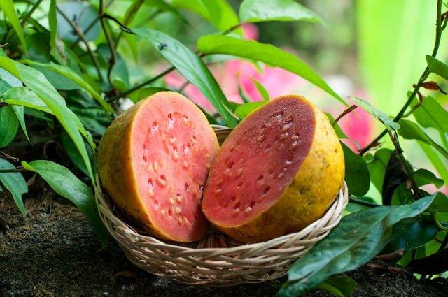 Фото фрукта гуава