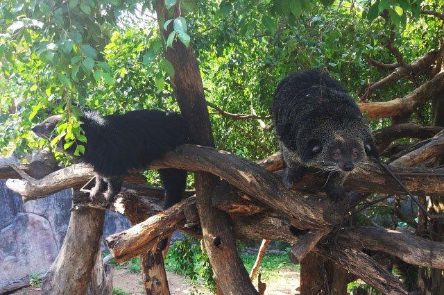Зоопарк Кхао Кхео в Паттайе