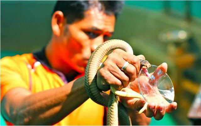 Змеиная ферма в Паттайе