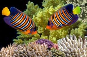 Рыбы Тайланда фото