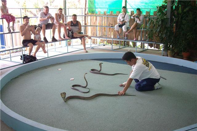 Змеиная ферма на Краби