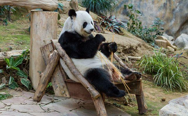 Зоопарк Чиангмая