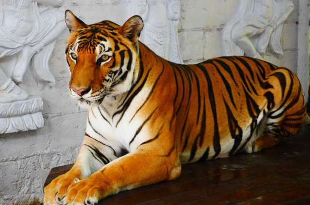 Аквариум и тигровый зоопарк на Самуи