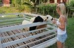 Фермы на острове Самуи