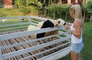 Фермы на Самуи