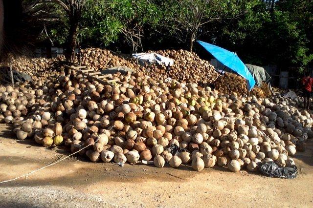 кокосовая ферма на Самуи