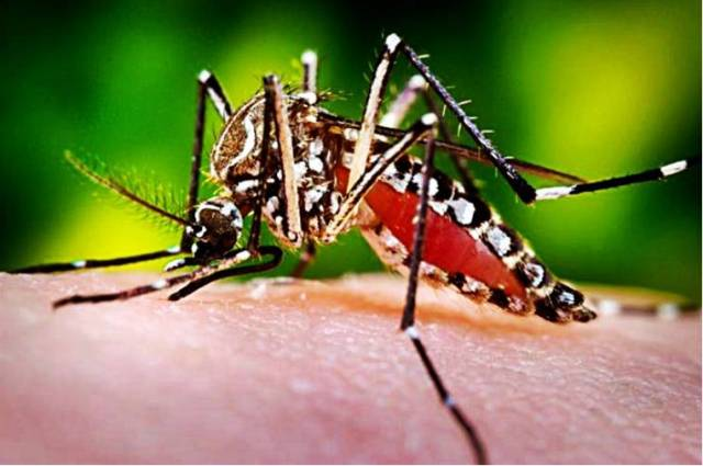 Лихорадка Денге в Тайланде