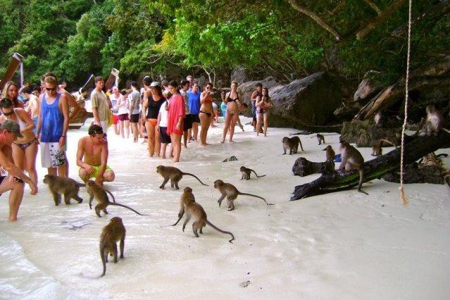 Обезьяны в Тайланде