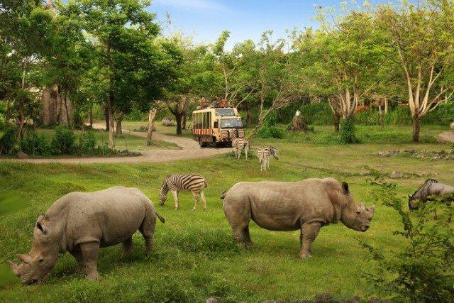 Сафари-парк на Бали