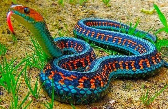 Змеи на Бали