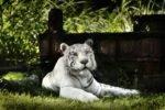 Зоопарк Bali Zoo на Бали
