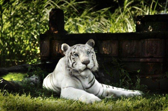 Зоопарк на Бали