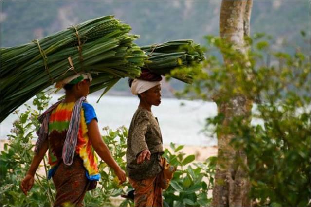 Ломбок – живописный остров в Индонезии, входящий в состав Малайского Архипелага. С южной стороны омывается водами Индийского океана, а с северной стороны – водами Тихого океана. Расположен в 100 км к востоку от Бали и отделен от него Ломбокским проливом. После открытия международного аэропорта в 2011 году Ломбок стал одним из излюбленных мест отдыха туристов со всего мира. Общая характеристика Общая площадь острова Ломбок составляет 5435 кв.км. Протяженность суши с севера на юг 80 км, а с востока на запад – не более 70 км. Высшей точкой острова является пик вулкана Ринджани, находящийся на высоте 3,72 км над уровнем моря. Ломбок входит в состав провинции Нуса-Тенгара. Территория острова поделена на 4 округа (кабупатена): • Западный. • Восточный. • Северный • Центральный. Административным центром является город Матарам – крупнейший населенный пункт провинции, расположенный на западном побережье острова. Здесь сосредоточена вся основная инфраструктура: больницы, рестораны, офисы, школы, торговые центры, почтовые отделения и правительственное учреждение. Население Ломбока составляет 3 млн человек. Более 80% жителей – представители этнической группы сасаки. Проживают в основном в северных, восточных, южных и центральных районах острова. Оставшиеся 10% населения – балийцы. Проживают они в основном в западной части Ломбока. Официальный язык на территории острова индонезийский. В деревнях почти все жители также свободно разговаривают на сасакском и балийском языках. В Матараме можно встретить много людей, знающих разговорный английский. Обычно это уличные торговцы, туристические гиды, сотрудники баров, ресторанов и отелей. Климатические условия Климат на острове субэкваториальный. С октября по апрель наблюдается сезон дождей. Тропические ливни на Ломбоке не являются редкостью, но длится каждый из них в среднем не более 1 часа. За год выпадает около 1600 мм осадков. Сухой сезон на Ломбоке длится с начала мая и до конца сентября. Это лучшее время для дайвинга, сноркелинга и 