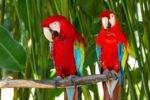 Парк птиц и рептилий на Бали
