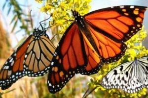 Парк бабочек на Бали