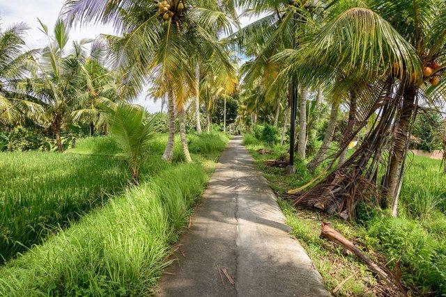 Тропа Sari Organik на Бали