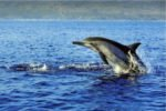 Дельфины на острове Бали