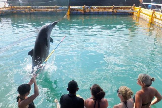 Bali Dolphin Interaction
