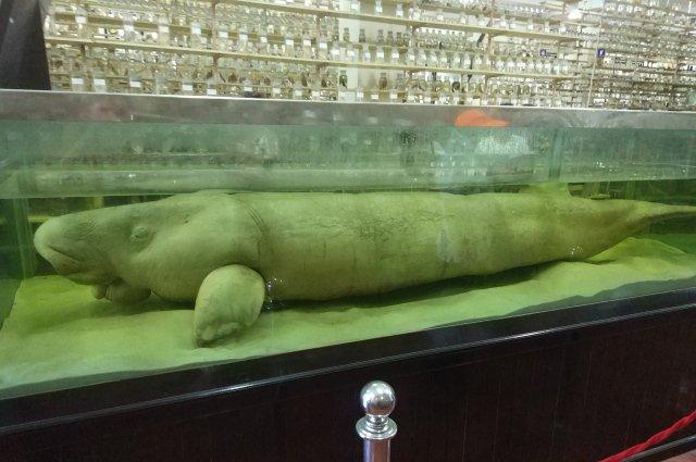 Океанографический музей в Нячанге