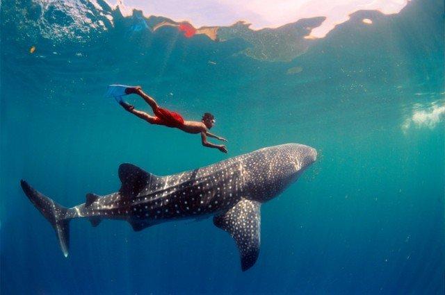 Акулы во Вьетнаме