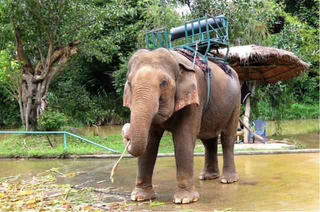 Слоны в Нячанге