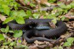 Змеи во Вьетнаме