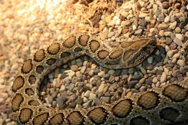 Змеи Вьетнама