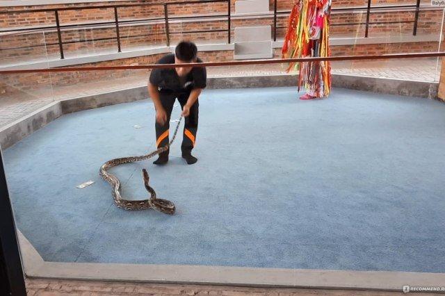 Змеиная ферма в Нячанге
